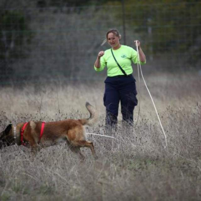Dog searching With Person