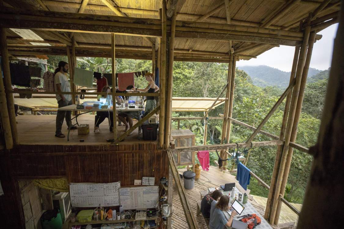 Scientists work in an open-air lab at the top of a bamboo structure