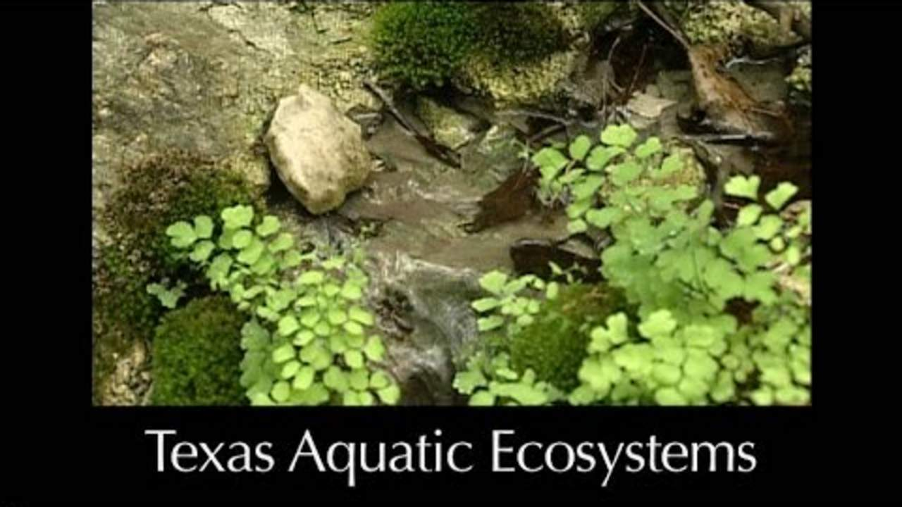 Aquatic Ecosystems – Lesson 6