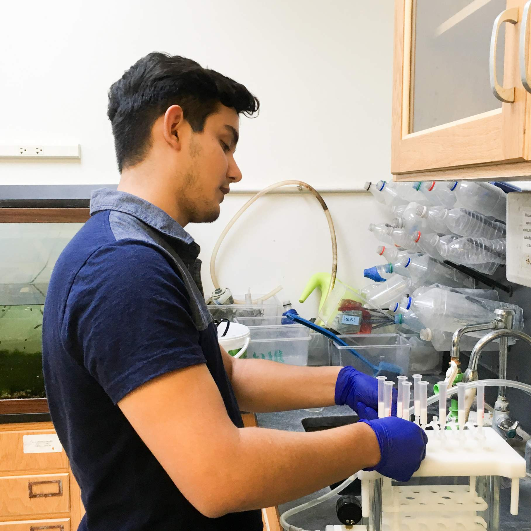 Isaac Cantu extracts waterborne hormones from fish water  (Caitlin Gabor, mentor)